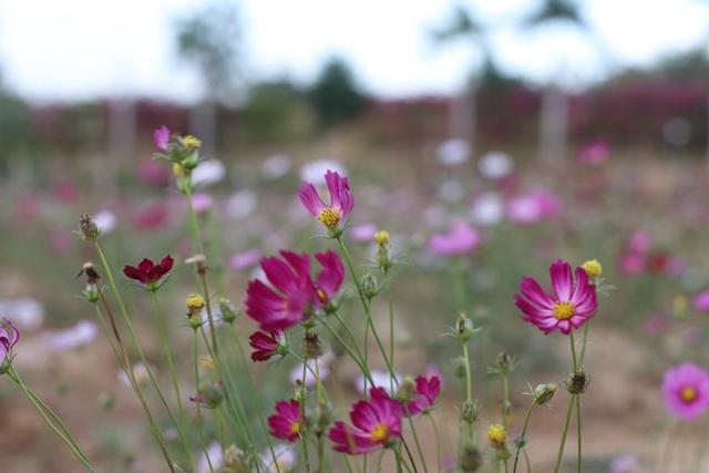 Lung linh sắc hoa bên dòng sông Đăk Bla - 2