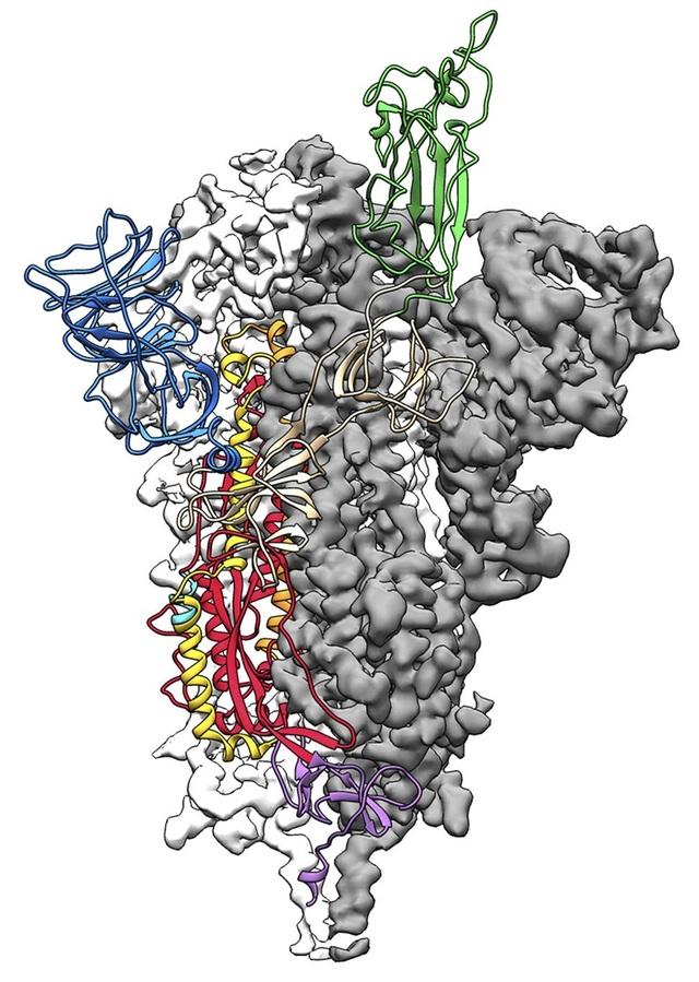 Bước đột phá trong nghiên cứu điều chế vắc-xin Covid-19 tại Mỹ - 1