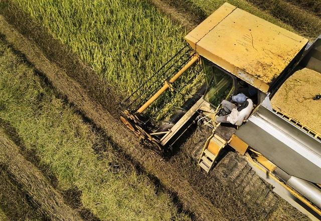 Bayer thúc đẩy nông nghiệp sáng tạo và bền vững bằng đầu tư công nghệ - 2