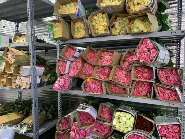 Mượn danh đi giải cứu hoa hồng Đà Lạt, nhập 1 bán gấp 4 lần - 2