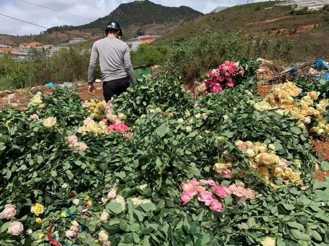 Mượn danh đi giải cứu hoa hồng Đà Lạt, nhập 1 bán gấp 4 lần - 8