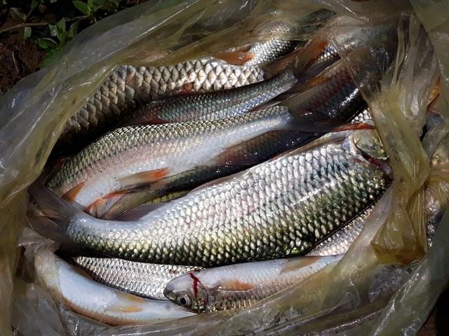 Hồi sinh đàn cá đặc sản trên dòng Chà Lạp - 5