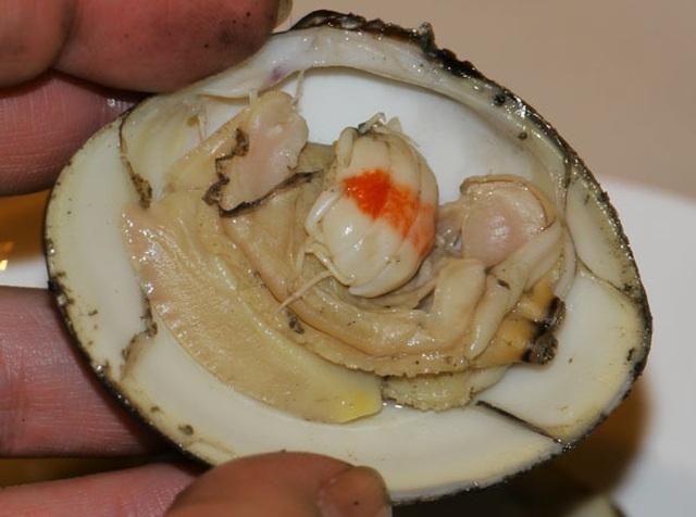 Ngao nướng xăng: Món nhậu lạ miệng của Triều Tiên trong Hạ cánh nơi anh - 4