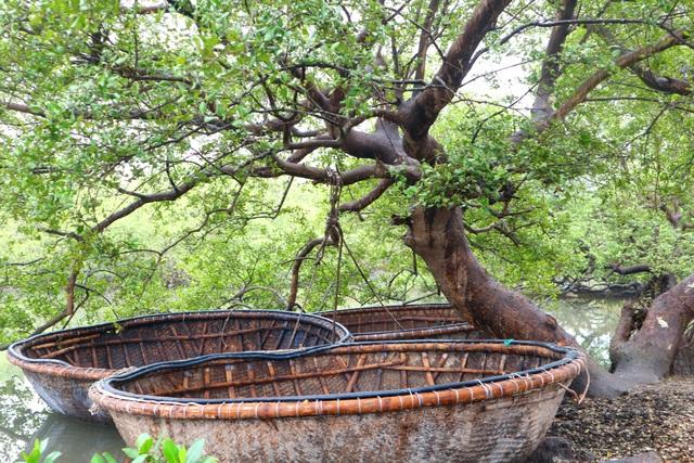 """Khám phá rừng ngập mặn nguyên sinh Tam Giang, """"báu vật"""" của Núi Thành - 1"""
