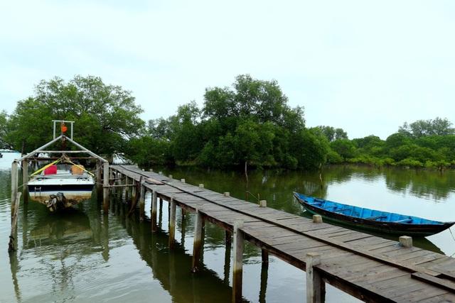"""Khám phá rừng ngập mặn nguyên sinh Tam Giang, """"báu vật"""" của Núi Thành - 12"""