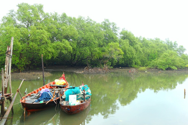 """Khám phá rừng ngập mặn nguyên sinh Tam Giang, """"báu vật"""" của Núi Thành - 4"""
