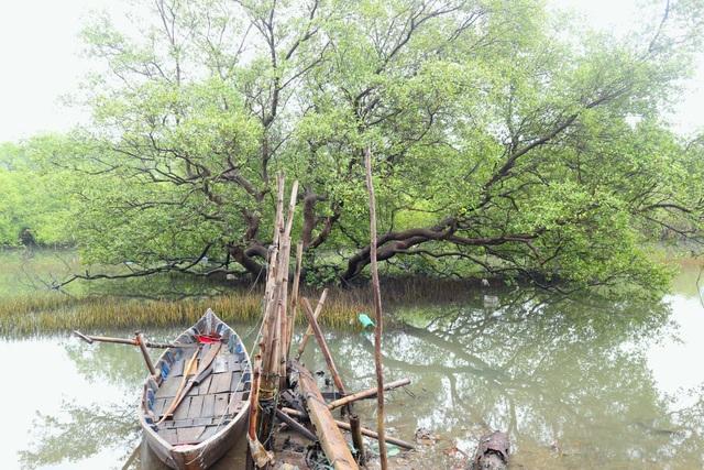 """Khám phá rừng ngập mặn nguyên sinh Tam Giang, """"báu vật"""" của Núi Thành - 6"""