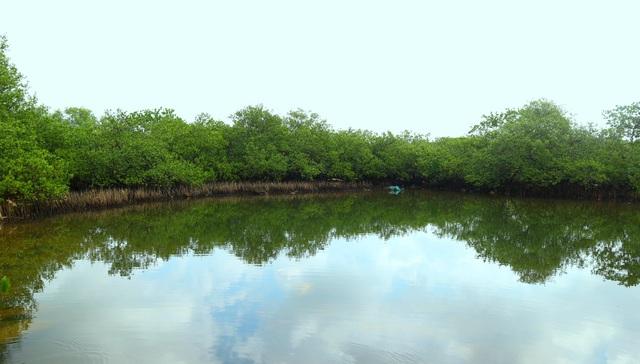 """Khám phá rừng ngập mặn nguyên sinh Tam Giang, """"báu vật"""" của Núi Thành - 9"""