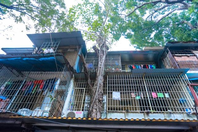 Kỳ dị cây mọc giữa nhà trong khu tập thể cũ độc nhất Hà Nội - 4