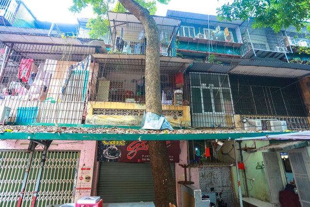 Kỳ dị cây mọc giữa nhà trong khu tập thể cũ độc nhất Hà Nội - 7