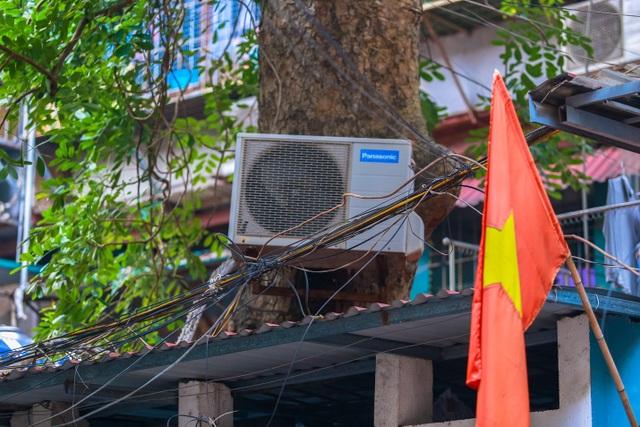 Kỳ dị cây mọc giữa nhà trong khu tập thể cũ độc nhất Hà Nội - 9