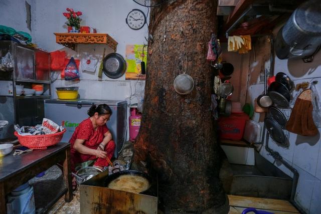 Kỳ dị cây mọc giữa nhà trong khu tập thể cũ độc nhất Hà Nội - 10