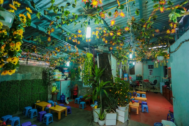 Kỳ dị cây mọc giữa nhà trong khu tập thể cũ độc nhất Hà Nội - 11