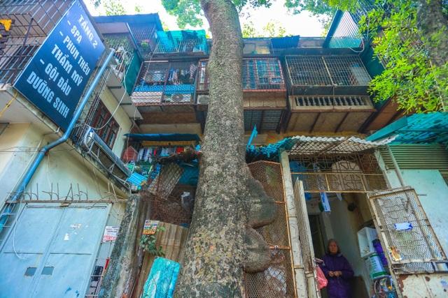 Kỳ dị cây mọc giữa nhà trong khu tập thể cũ độc nhất Hà Nội - 15