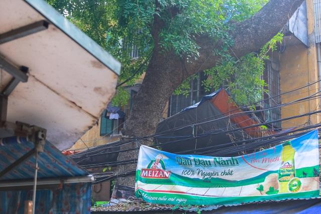 Kỳ dị cây mọc giữa nhà trong khu tập thể cũ độc nhất Hà Nội - 17