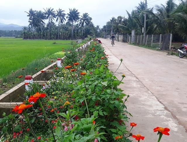 """Cả làng """"xin"""" hoa về trồng, đường quê Bình Định đẹp như tranh họa - 6"""