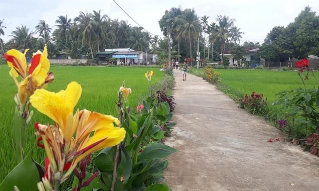 """Cả làng """"xin"""" hoa về trồng, đường quê Bình Định đẹp như tranh họa - 8"""