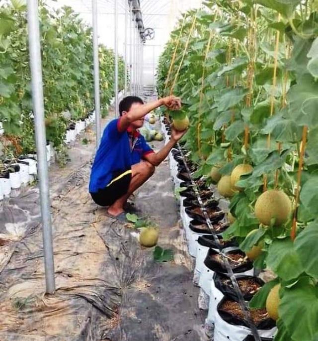 Nghệ An: Tạo việc làm và thu nhập từ đào tạo nghề nông thôn - 2