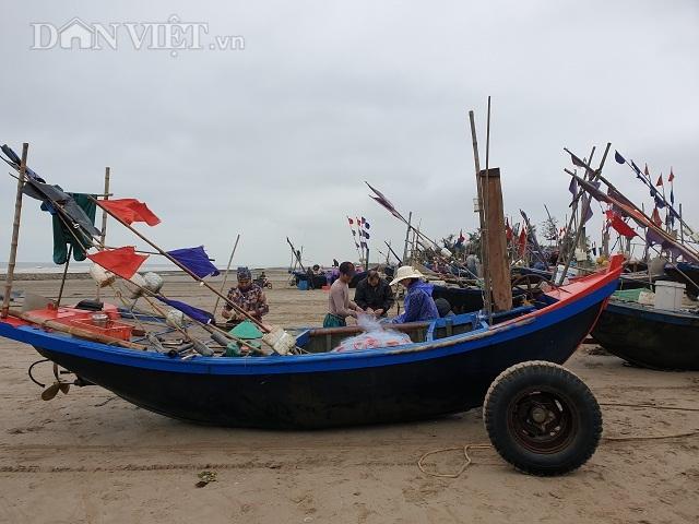 Nghề độc, lạ ở Nam Định: Đi cày trên biển bắt ngao to bự - 8