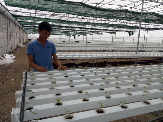 Nghệ An: Tạo việc làm và thu nhập từ đào tạo nghề nông thôn - 6