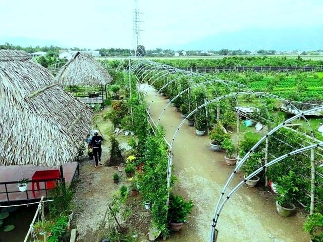 """Check-in """"vườn trái cây Nam bộ"""" nơi rốn lũ của Quảng Nam - 1"""