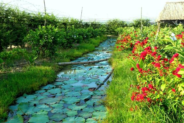 """Check-in """"vườn trái cây Nam bộ"""" nơi rốn lũ của Quảng Nam - 14"""