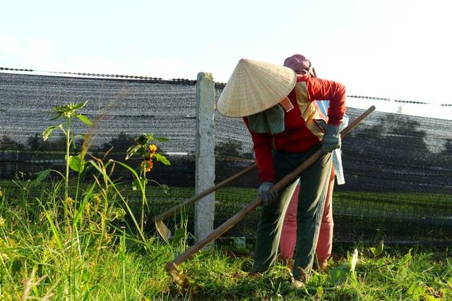 """Check-in """"vườn trái cây Nam bộ"""" nơi rốn lũ của Quảng Nam - 5"""