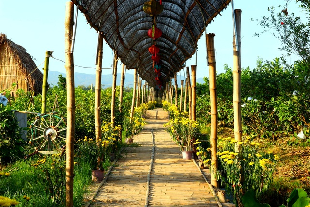 """Check-in """"vườn trái cây Nam bộ"""" nơi rốn lũ của Quảng Nam - 7"""