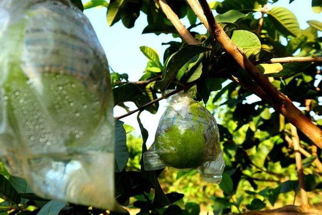 """Check-in """"vườn trái cây Nam bộ"""" nơi rốn lũ của Quảng Nam - 8"""