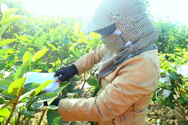"""Check-in """"vườn trái cây Nam bộ"""" nơi rốn lũ của Quảng Nam - 9"""