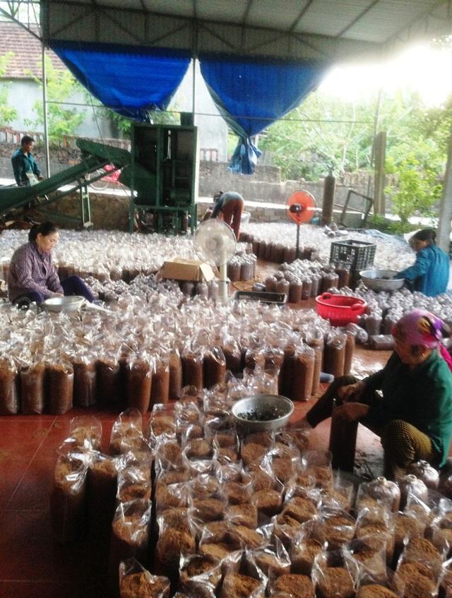 Nghệ An: Mô hình trồng nấm mang lại hiệu quả kinh tế của chàng kỹ sư trẻ - 4