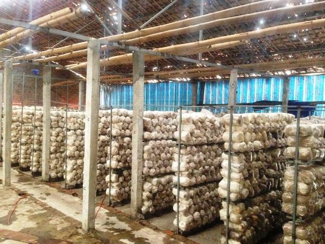 Nghệ An: Mô hình trồng nấm mang lại hiệu quả kinh tế của chàng kỹ sư trẻ - 1