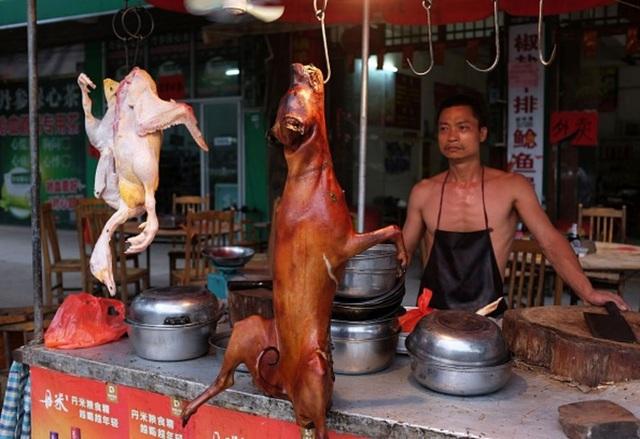 Thâm Quyến cấm ăn thịt chó mèo để chặn sự lây lan của corona virus - 1