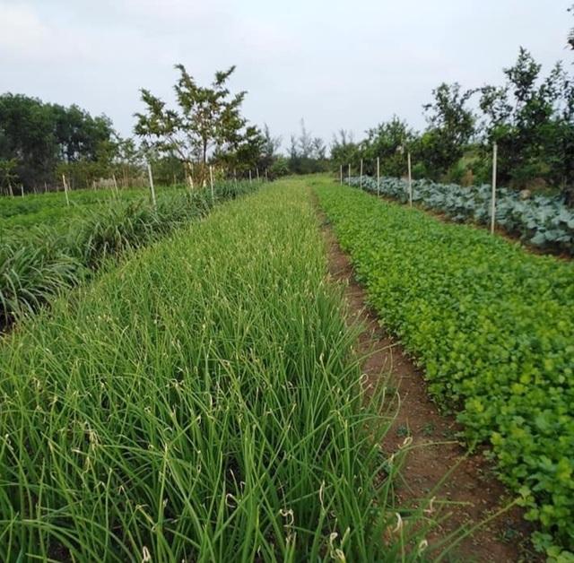 Thạc sĩ nông nghiệp bỏ việc về quê trồng rau sạch thu gần 1 tỷ đồng mỗi năm - 4