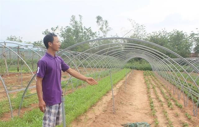 Thạc sĩ nông nghiệp bỏ việc về quê trồng rau sạch thu gần 1 tỷ đồng mỗi năm - 5