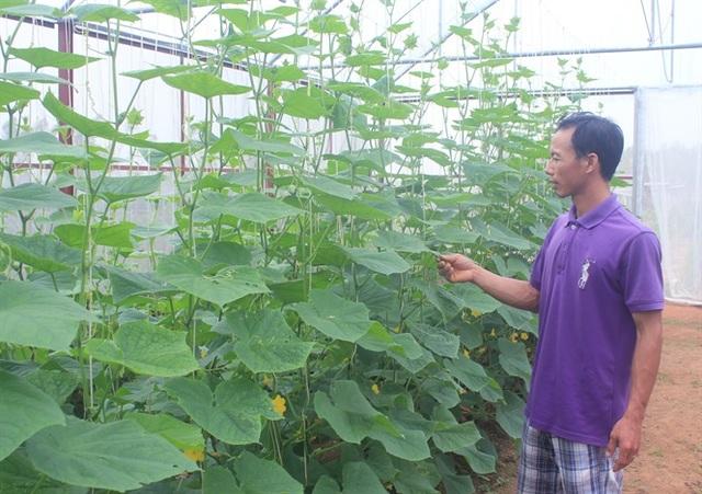 Thạc sĩ nông nghiệp bỏ việc về quê trồng rau sạch thu gần 1 tỷ đồng mỗi năm - 2