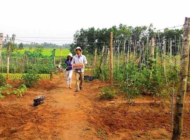 Thạc sĩ nông nghiệp bỏ việc về quê trồng rau sạch thu gần 1 tỷ đồng mỗi năm - 1
