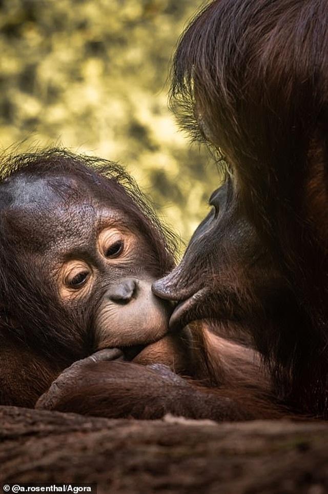 Những bức ảnh tuyệt đẹp và đầy ngạc nhiên về tình yêu - 5