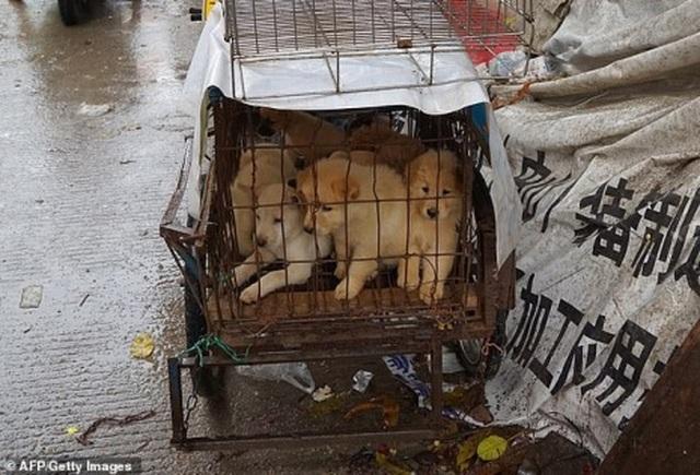 Cấm ăn thịt chó mèo để ngăn chặn virus corona lây lan - 1