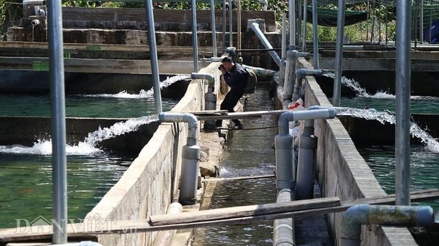 Với 70 hồ nuôi cá tầm, 1 nông dân Lâm Đồng thu tiền tỷ mỗi năm - 2
