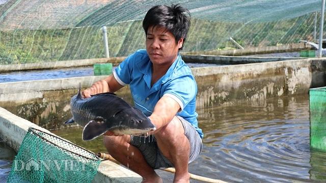 Với 70 hồ nuôi cá tầm, 1 nông dân Lâm Đồng thu tiền tỷ mỗi năm - 4
