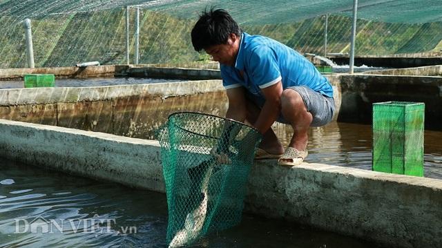 Với 70 hồ nuôi cá tầm, 1 nông dân Lâm Đồng thu tiền tỷ mỗi năm - 6