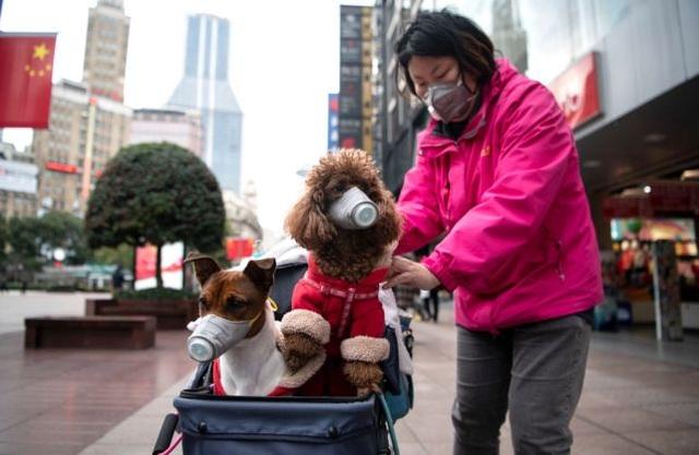 Hong Kong phát hiện virus corona trên chó cưng