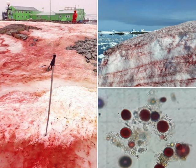 """Bí ẩn """"băng máu"""" xuất hiện ở Nam Cực - 1"""