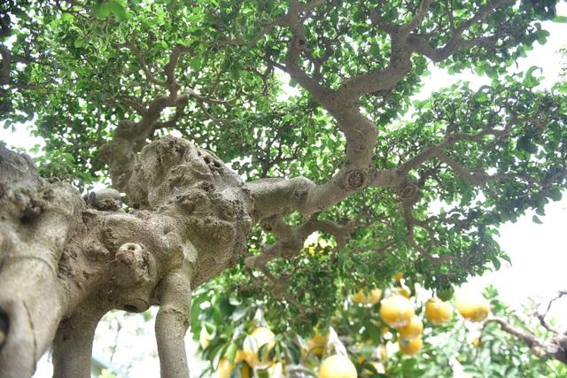 Hoa mắt trước khu vườn triệu đô của ông vua cây cảnh - 4