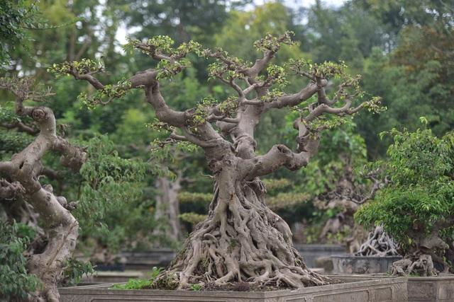 Hoa mắt trước khu vườn triệu đô của ông vua cây cảnh - 5