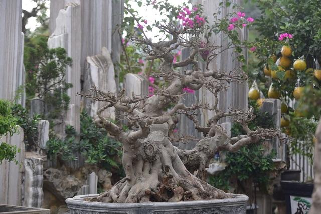 Hoa mắt trước khu vườn triệu đô của ông vua cây cảnh - 6