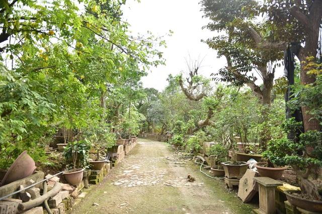 Hoa mắt trước khu vườn triệu đô của ông vua cây cảnh - 3