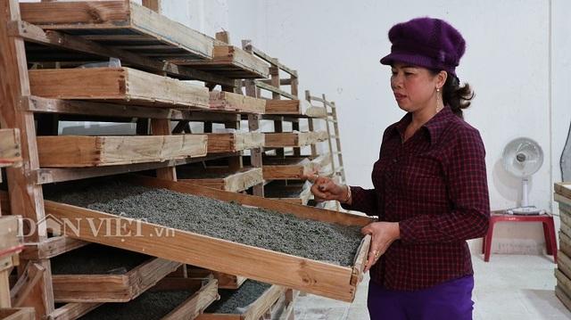 Do Covid-19, nghề nuôi tằm Lâm Đồng lao đao vì cạn trứng giống - 2