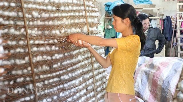 Do Covid-19, nghề nuôi tằm Lâm Đồng lao đao vì cạn trứng giống - 3